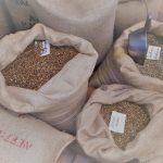 Wandleuchte N°91 Perlbohne aus Kaffeesack